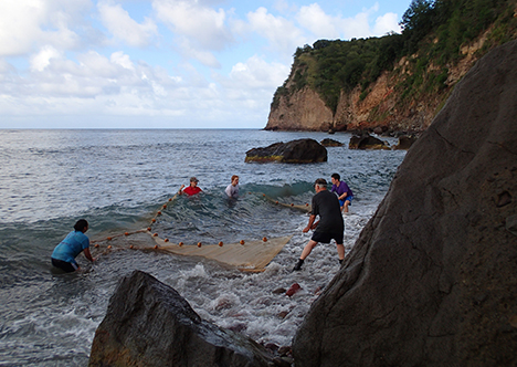 Monserrat students in ocean with net