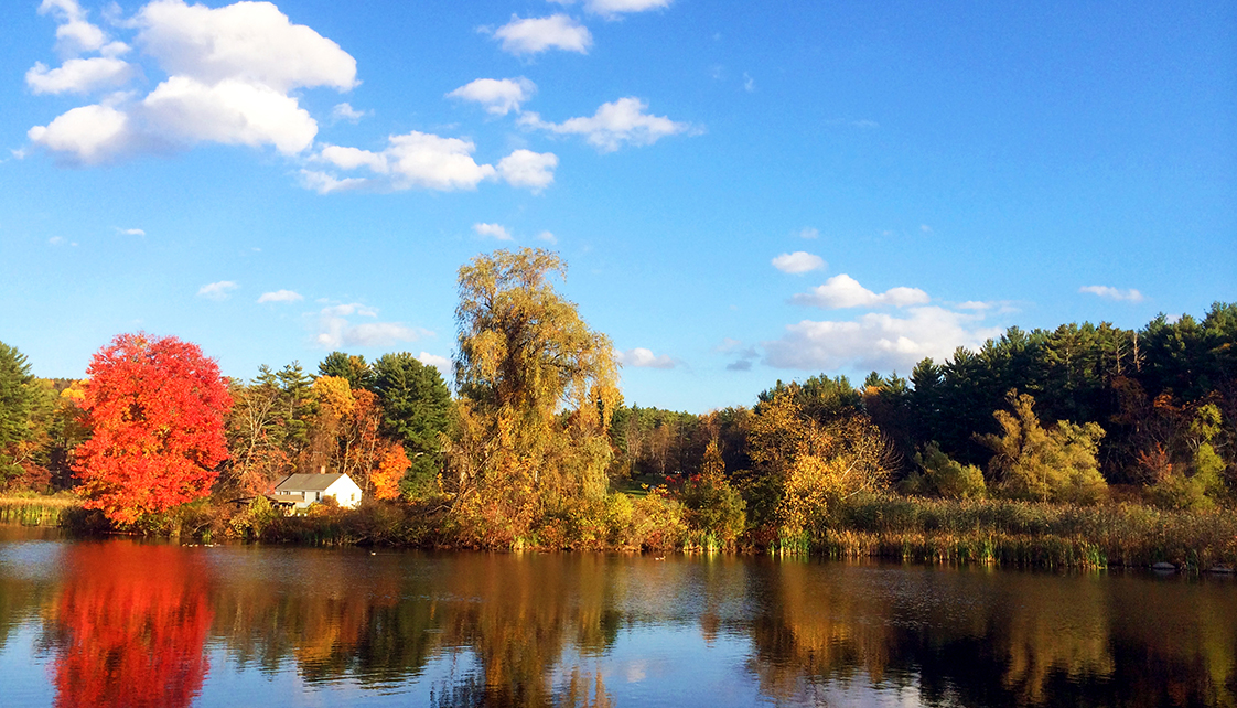 The lower pond in autumn