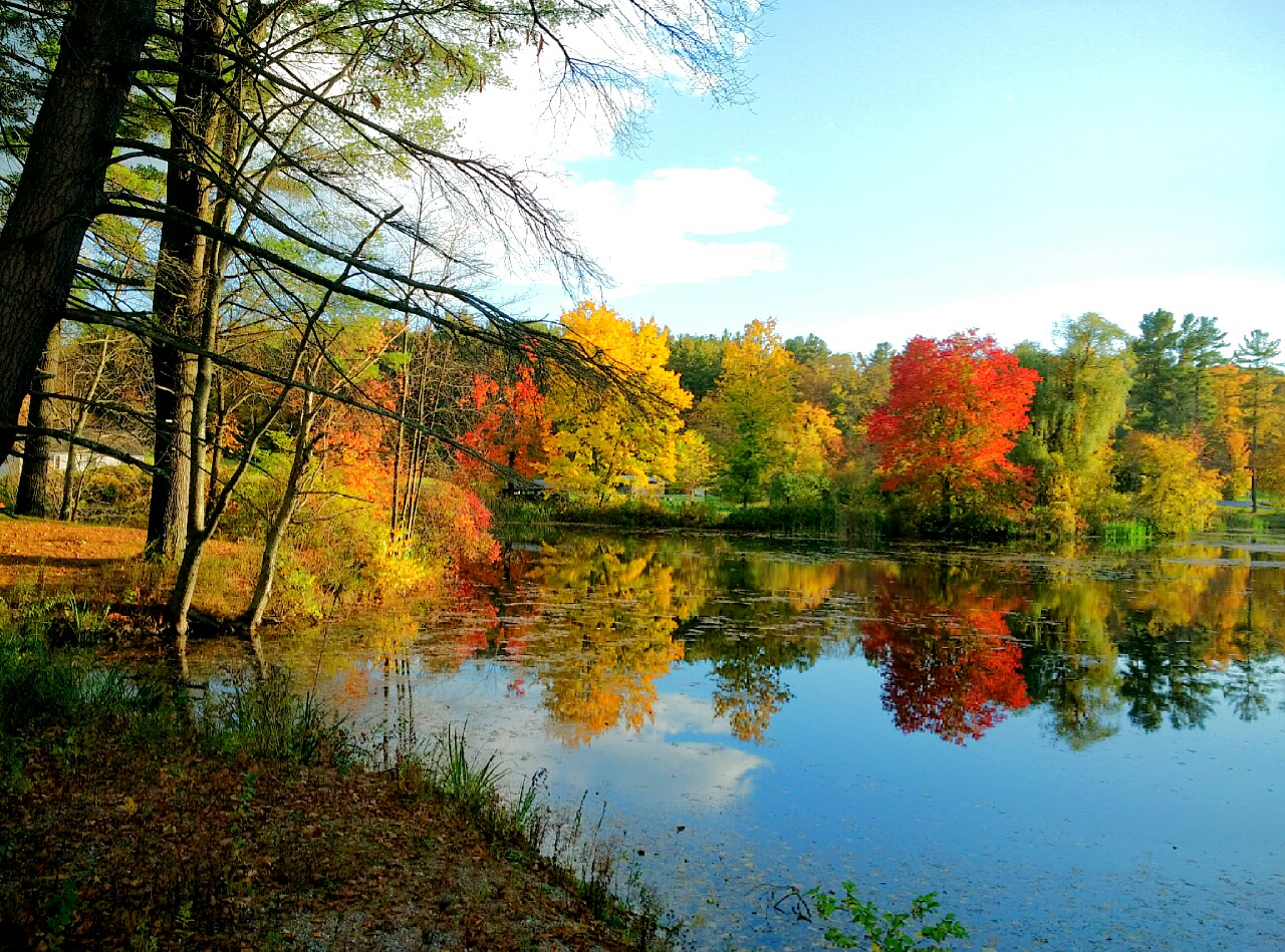Fall color on pond